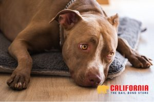 Felony Animal Cruelty in California